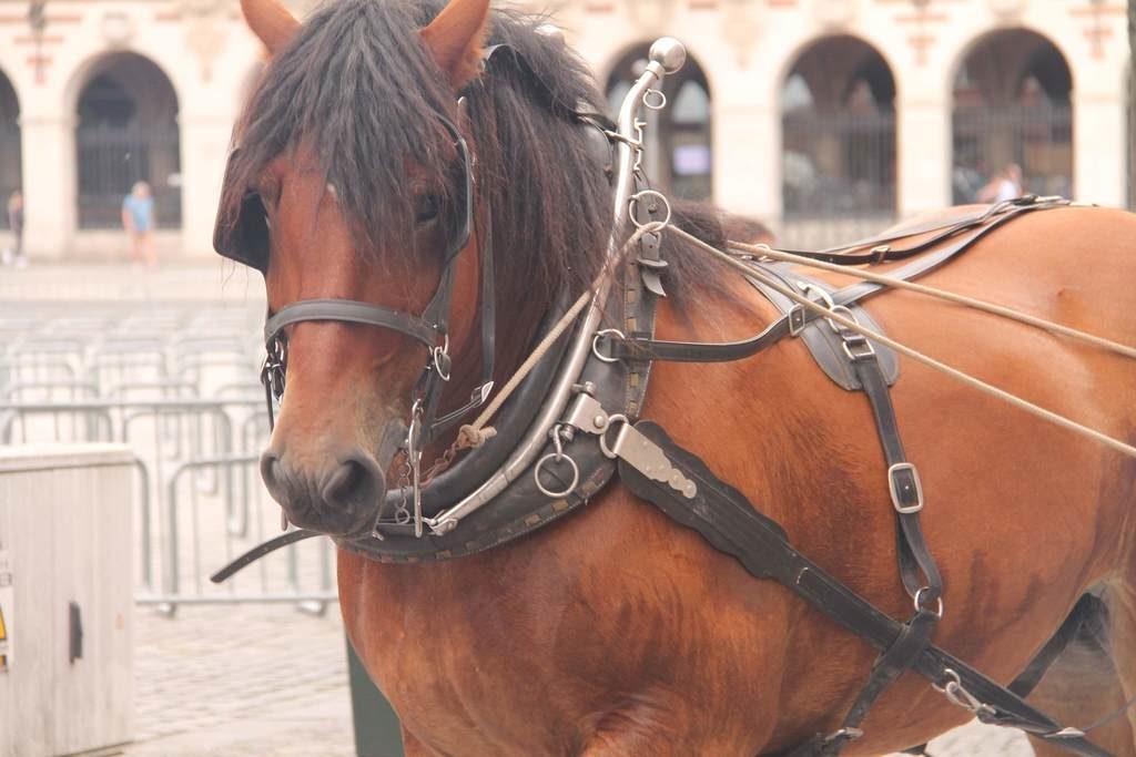 De stoet van de 46st meyboom Leuven